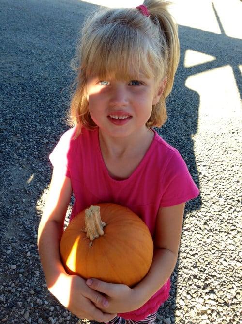 peltzer pumpkin patch