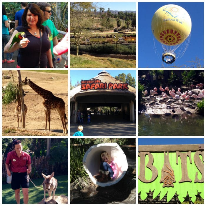 San Diego Safari Park Deal and Review