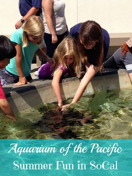 graphic regarding Aquarium of the Pacific Coupons Printable titled Aquarium of the Pacific Prolonged Seashore · The Conventional Mother