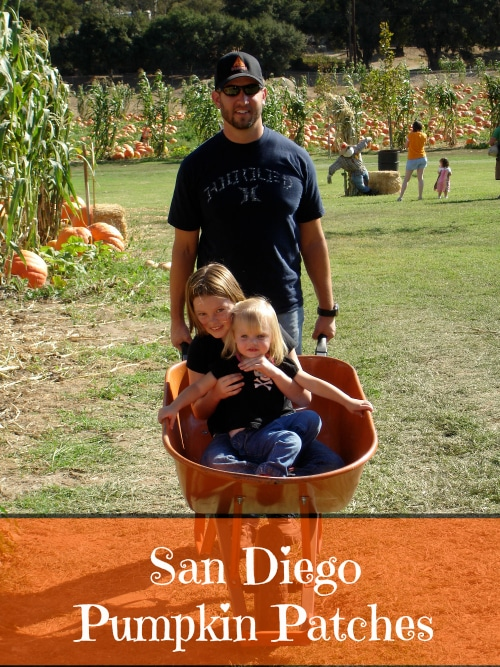 san diego pumpkin patch
