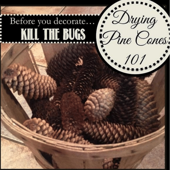 How to clean and dry Pinecones