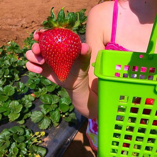 Strawberry Farm temecula