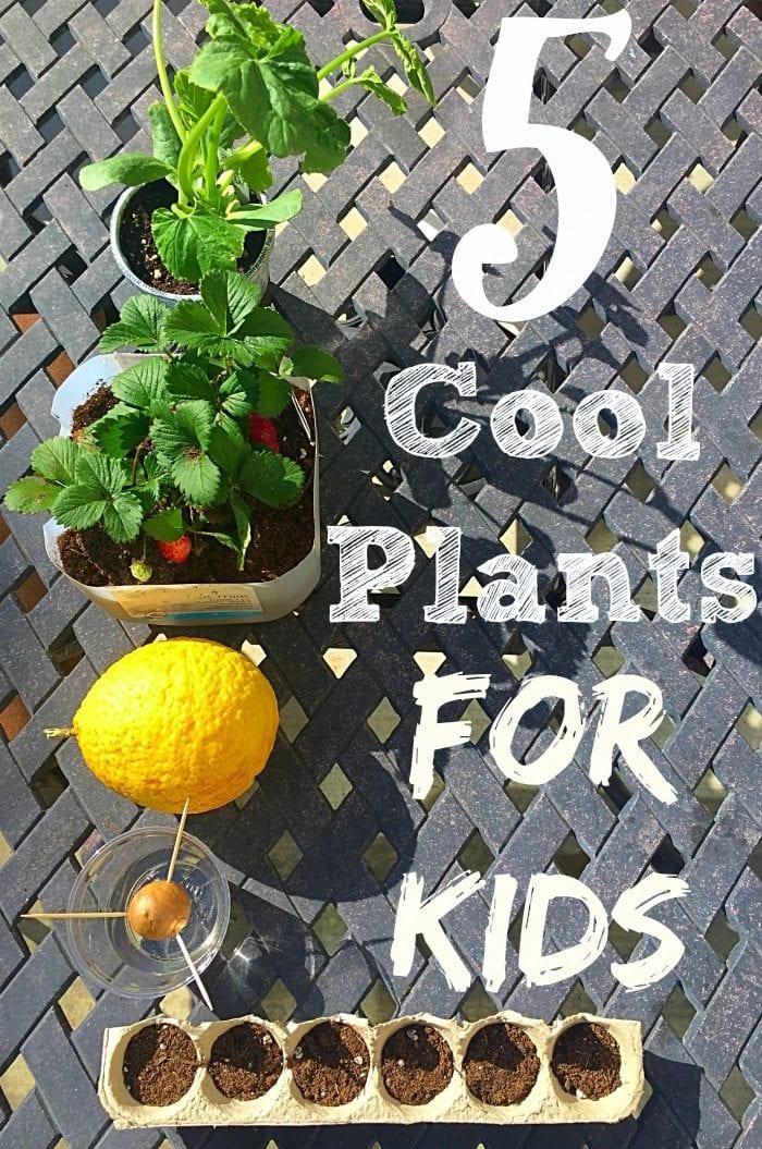 Gardening activities for kids. Great plants for kids and easy tips for gardening with kids.