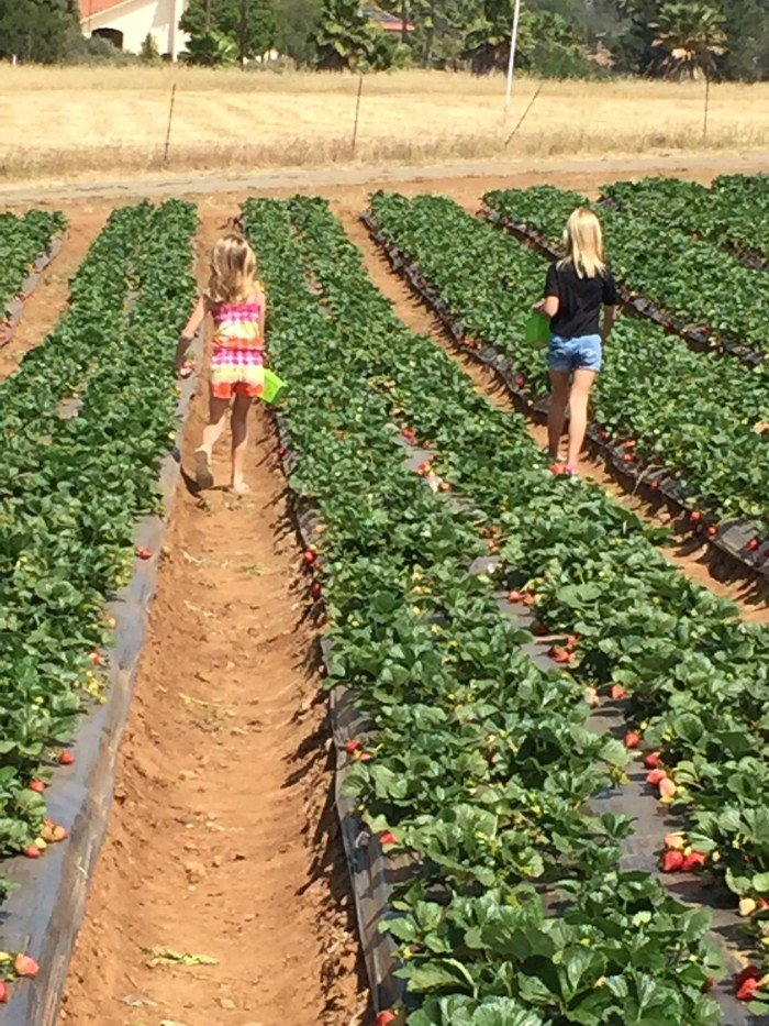 Strawberry Farm temecula