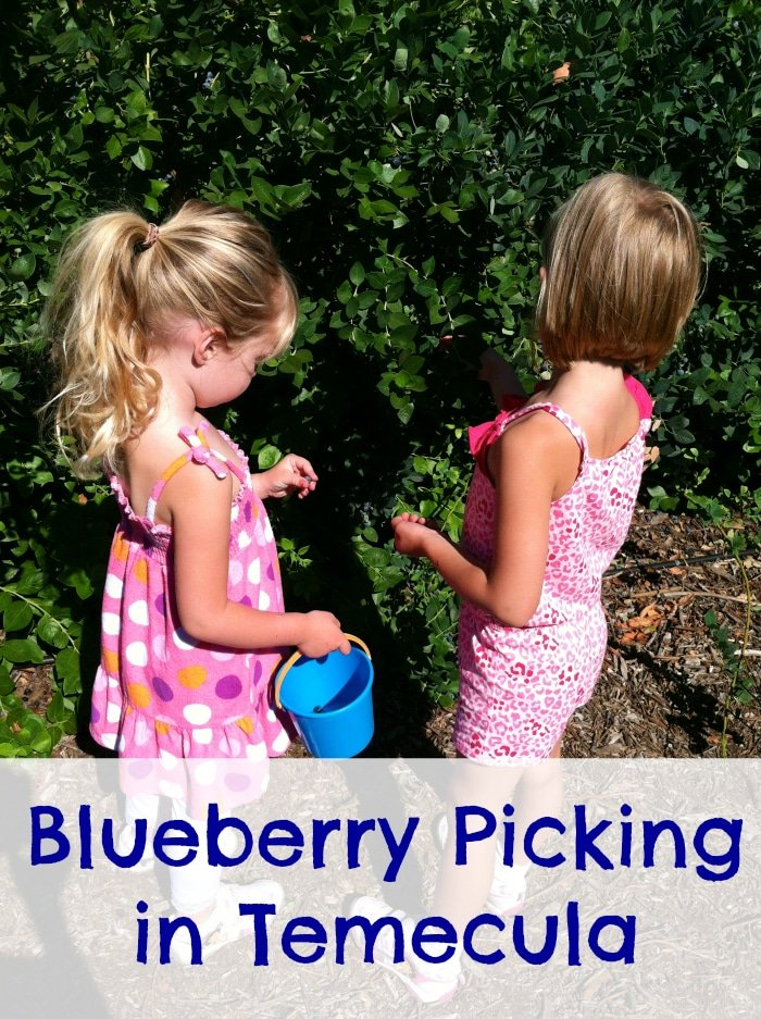 Temecula blueberry Company
