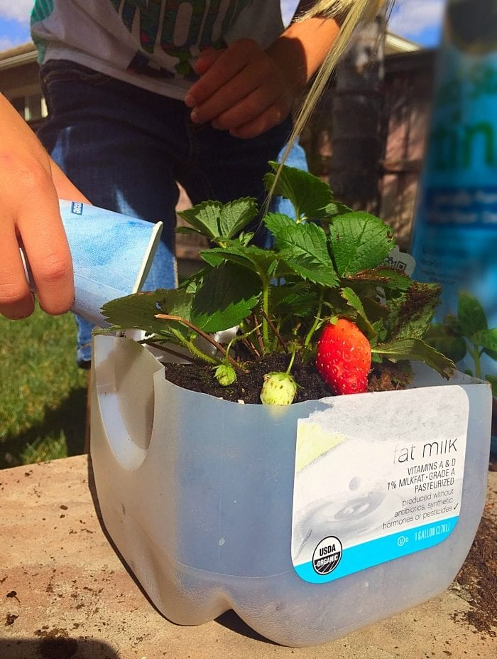 Tips for gardening with kids. Fun plants to grow with your kids that are fun.