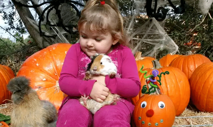 Zoomars Petting Zoo Pumpkin Patch Coupon The Typical Mom