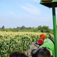Tanaka Farms watermelon tour