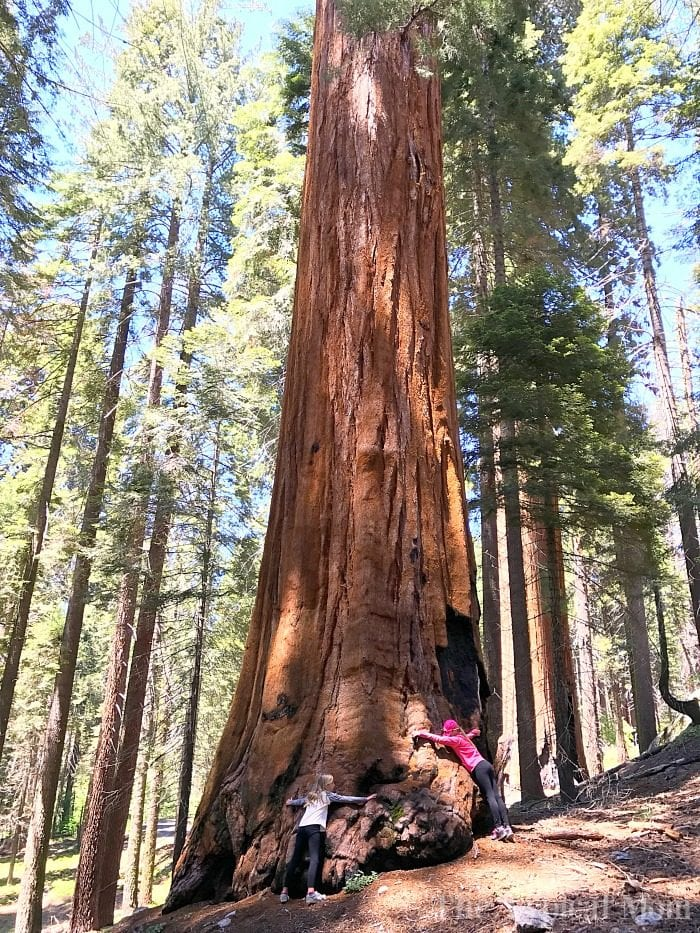 what to see in sequoia national park