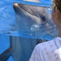 Sea World Behind The Scenes Tour + Ticket Giveaway
