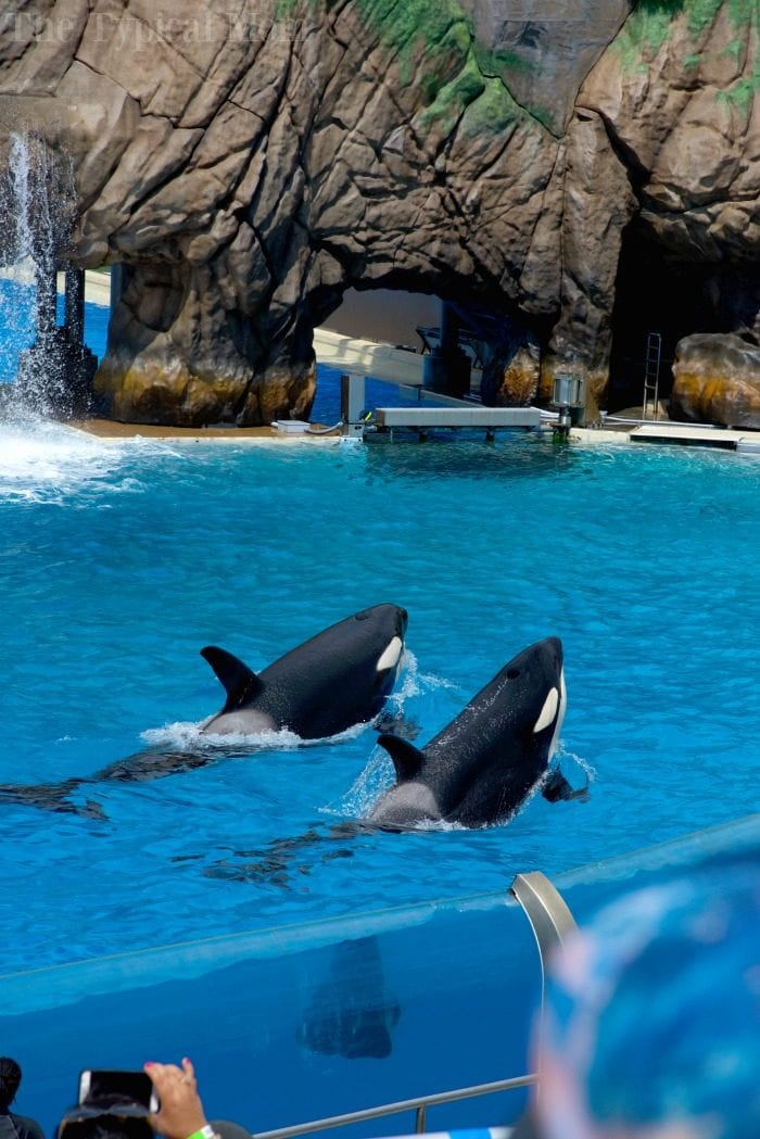 sea world behind the scenes tour 4