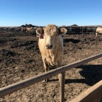 Learning About Texas Beef in Amarillo