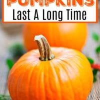 how to preserve pumpkins