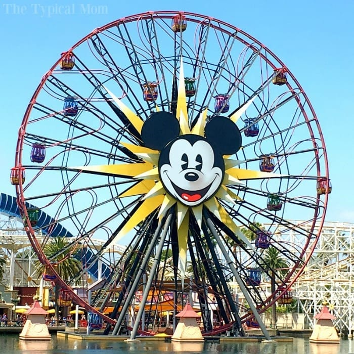 How to Eat for Free at Disneyland 3