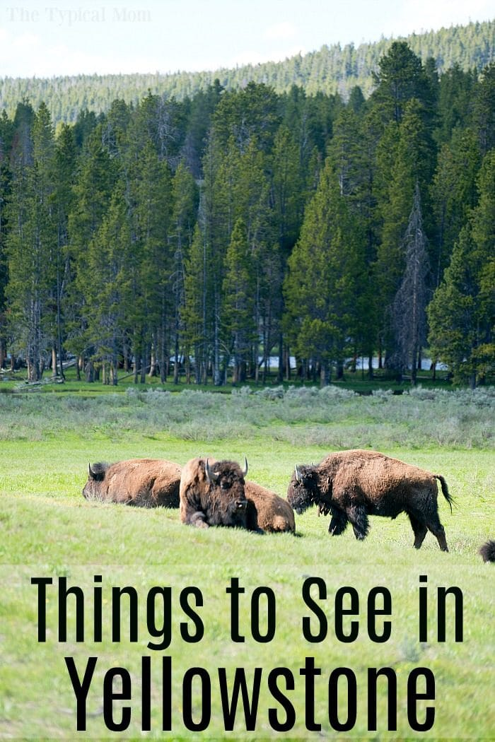 planning a trip to yellowstone