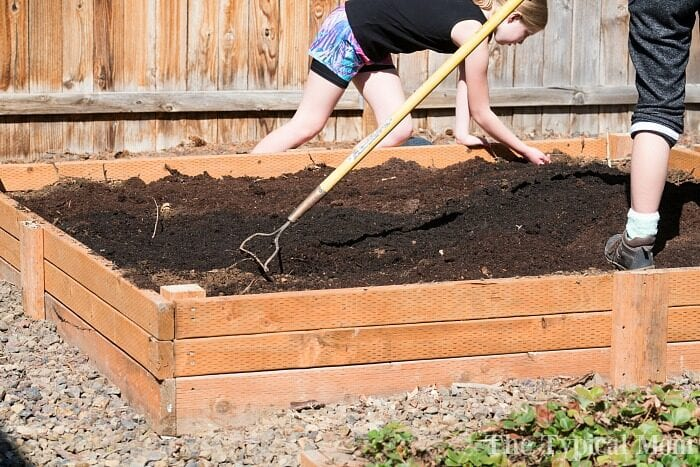 building a vegetable garden