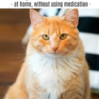 Cat Dander Allergy