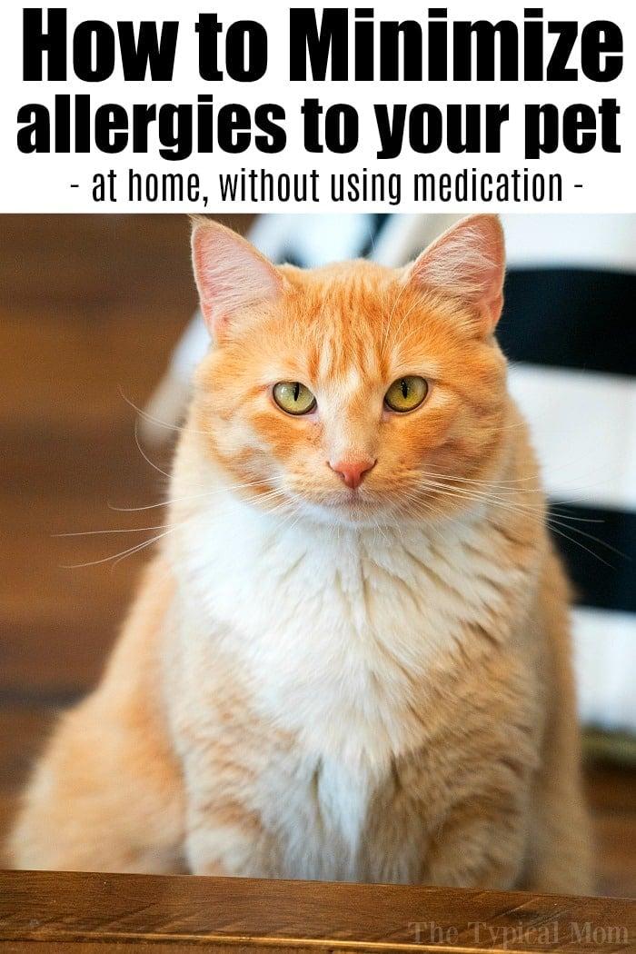 Cat Dander Allergy