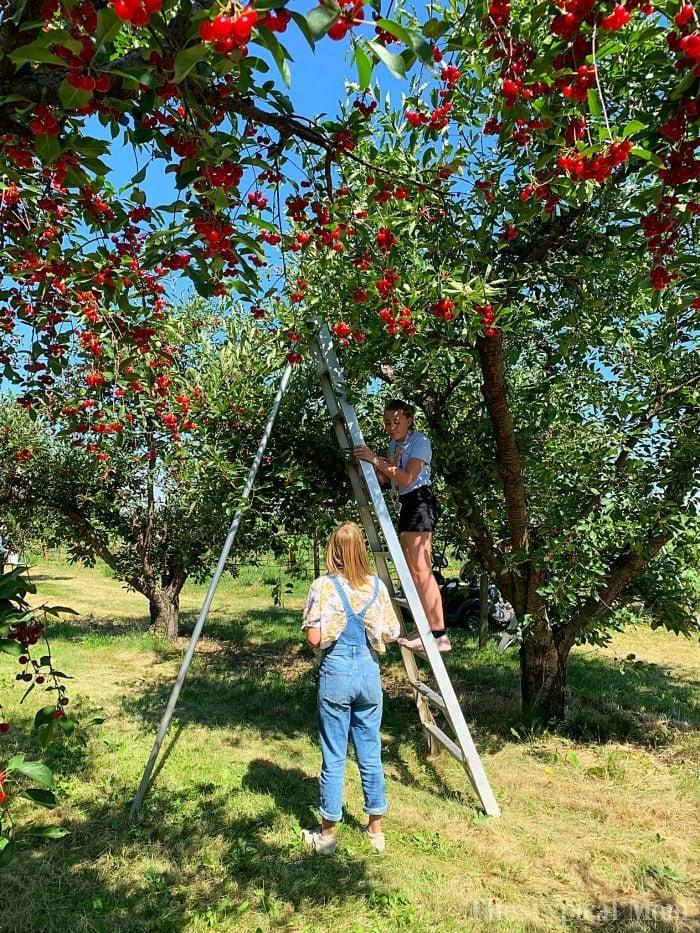 kellys orchard idaho
