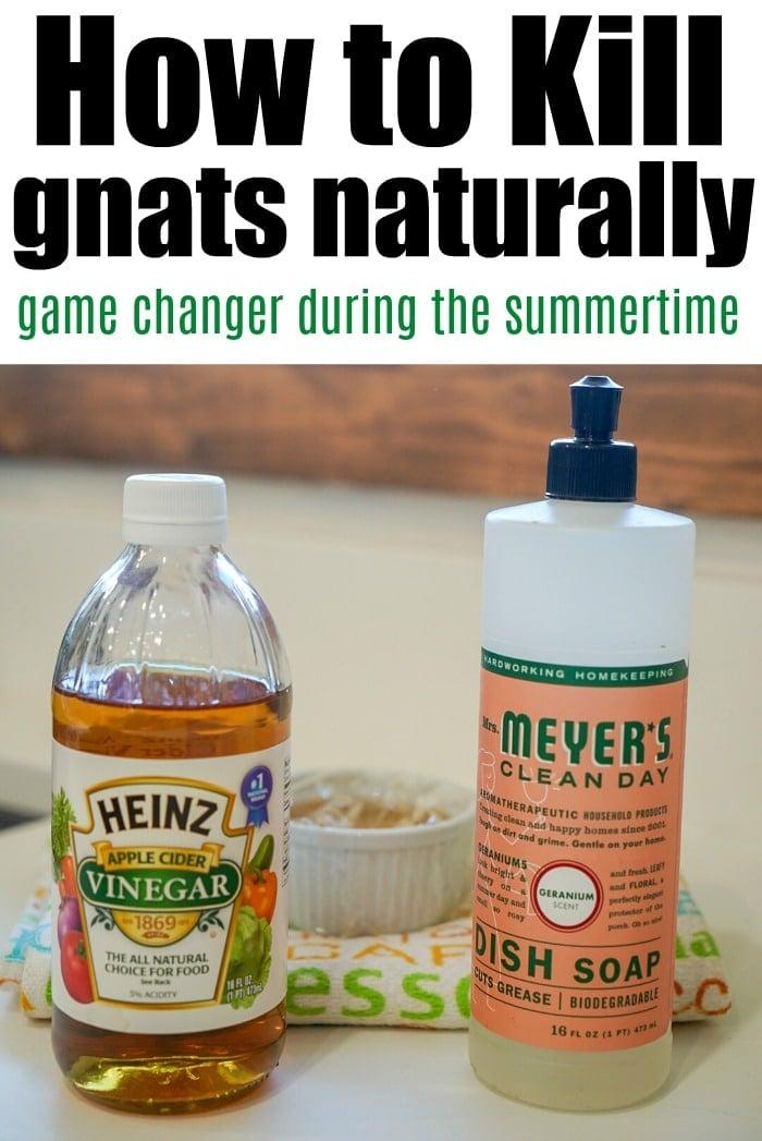 natural gnat killer